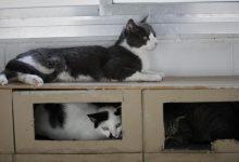 Busquen llar per a 96 gats després del desnonament del seu amo a Gandia