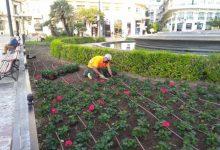 València planta més de 6.000 flors pel 9 d'Octubre