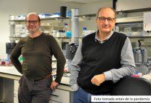 Personal investigador de Fisabio, UV, UPF i Idibgi demostren la vinculació entre els microbis intestinals i la memòria recent