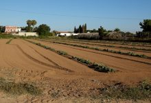 El Museu de la Rajoleria proposa un 'Passeig per l'Horta' per conéixer els racons més significatius de les terres de cultiu que envolten Paiporta