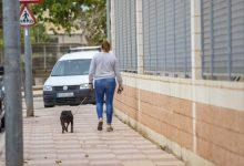 Cullera obri la inscripció en el cens d'animals de companyia