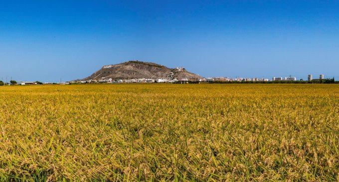 Iniciatives de relleu impulsen la gastronomia de l'arròs com a senya d'identitat de Cullera