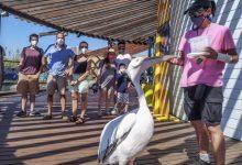 El Oceanogràfic obté el Certificat de Turisme Segur