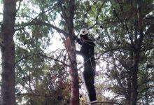 La Regidoria de Medi Ambient instal·la nius per a aus insectívores a Paiporta