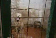 Rescatats 10 gossos en un habitacle sense llum i envoltats de fem i excrements