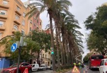 L'Ajuntament treballa en la poda de l'arbrat al carrer Ruaya de València