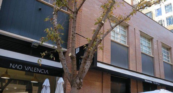 L'Ajuntament de València escomet la poda de 176 arbres al carrer de l'Escultor Antonio Sacramento