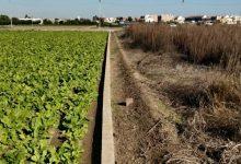 València impulsa expedients sancionadors a les propietats d'espais agrícoles abandonats