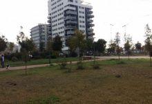 Comencen les obres de la pèrgola per a activitats musicals i culturals al parc de Malilla