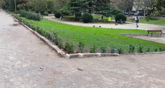 Es replanten les bardisses de l'avinguda Blasco Ibáñez des de Gómez Ferrer i Suècia