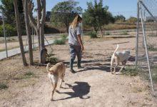 Paterna endureix les sancions per maltractament i abandone animal amb multes de fins a 18.000 euros