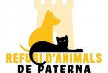 El Refugi d'Animals de Paterna estrena web per a fomentar les adopcions