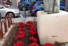 Dos mil cinc-centes plantes de Nadal adornen els parterres i jardins de la ciutat d'Alzira
