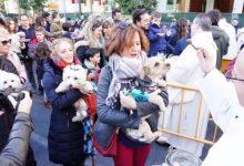La tradicional benedicció d'animals per sant Antoni Abat serà virtual per la pandèmia