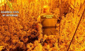 Intervenidas 300 plantas de marihuanas en tres operaciones de la Guardia Civil en Picassent