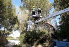 València aprova, demà, el Pla Local de Prevenció d'Incendis Forestals