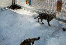 València elimina las antiguas jaulas de confinamiento de gatos del centro de acogida de animales