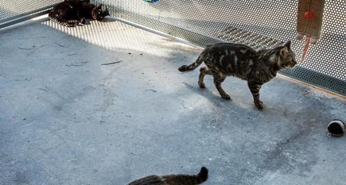 València elimina les antigues gàbies de confinament de gats del centre d'acollida d'animals