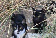 El programa CES de Catarroja atén a 74 gats durant 2020