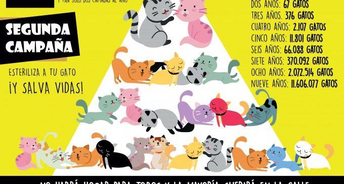 Quart de Poblet se suma a la segunda campaña de control de la natalidad felina