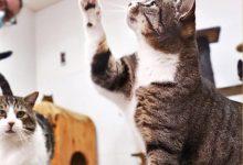 Paterna promou la protecció de colònies felines controlades