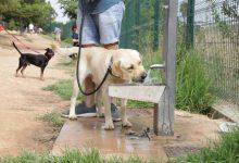 Paterna aprova la nova Ordenança de Benestar Animal que permetrà implantar el servei d'ADN caní a la ciutat