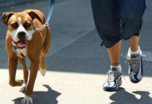 Xàtiva imposa més d'una trentena de sancions en els primers mesos d'implantació del nou sistema d'ADN caní