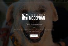 Modepran gestiona la recollida d'animals abandonats a Sedaví