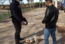 La Policia Local de Massamagrell comença una campanya de control del cens caní