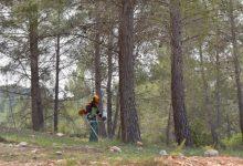 Les brigades forestals de la Diputació posen a punt les àrees recreatives