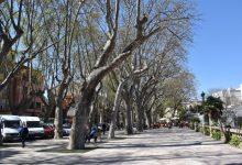Accident laboral a Xàtiva durant la tala dels plataners de l'Albereda