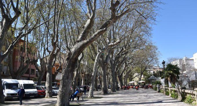 Xàtiva reposarà els arbres de l'Albereda que es troben en pitjor estat
