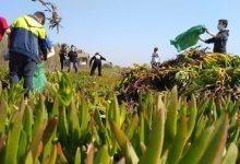 Primera actuació del projecte de renaturalització de platges de la Diputació de València