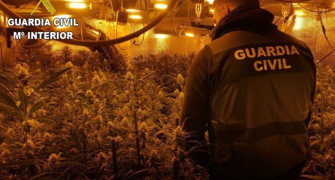 Quasi 20 detinguts en una organització criminal amb set plantacions de marihuana a València i Alacant