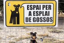 'Jo sí sóc responsable', lema de la nova campanya de la Regidoria de Benestar Animal d'Almussafes