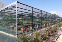 Un nou hivernacle per garantir la vegetació autòctona de la Devesa