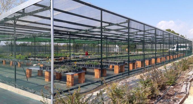 Un nuevo invernadero para garantizar la vegetación autóctona de la Devesa