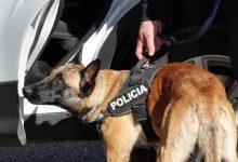 Tres nuevos equipos se incorporan hoy a la unidad canina de la Policía Local de València