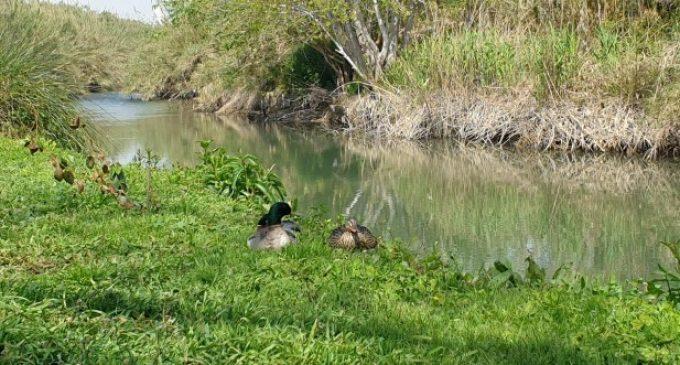 El Parc Natural del riu Túria a Quart de Poblet, reclam per al turisme i baló d'oxigen per a la ciutadania