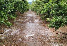 La Costera, la gran afectada por el pedrisco con importantes daños en más de 600 hectáreas de cultivo