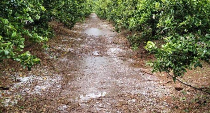 La Costera, la gran afectada per la pedra amb importants danys en més de 600 hectàrees de cultiu