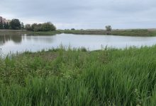 Un filtre verd executat per la Conselleria d'Agricultura renaturalitza en la marjal un terreny degradat de Massamagrell