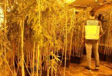 La Policia desmantella una plantació de marihuana en una nau de Quart de Poblet