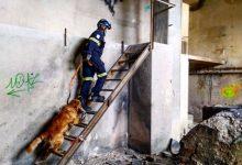 La Unitat Canina de Bombers de València ha intervingut en més d'un centenar d'intervencions en els últims sis anys