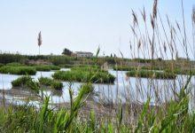 Transición Ecológica presenta a los fondos Next Generation proyectos por más de 60 millones de euros para conservación de L'Albufera