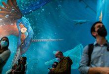 El CCCC celebra el Dia dels Museus sota el lema 'Emergència cultural'