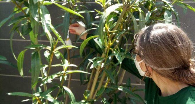 """L'alumnat de l'Escola Taller Et Formem """"Recicla't"""" de Burjassot realitza una pràctica per a aprendre a realitzar el control de plagues"""