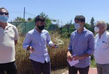 València reurbanizará El Palmar y mejorará la accesibilidad de La Punta