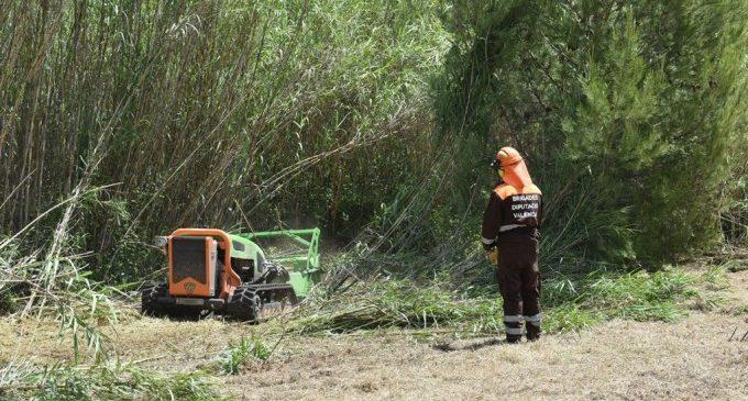 Riba-roja recuperarà la vegetació de Ribera al costat del riu Túria amb l'ajuda de la Diputació