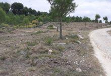 Paterna executa el manteniment de la franja de seguretat d'un dels circuits forestals de La Vallesa